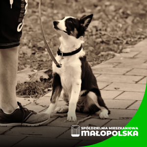 Apel do właścicieli psów – Urzędu Miasta Gorlice